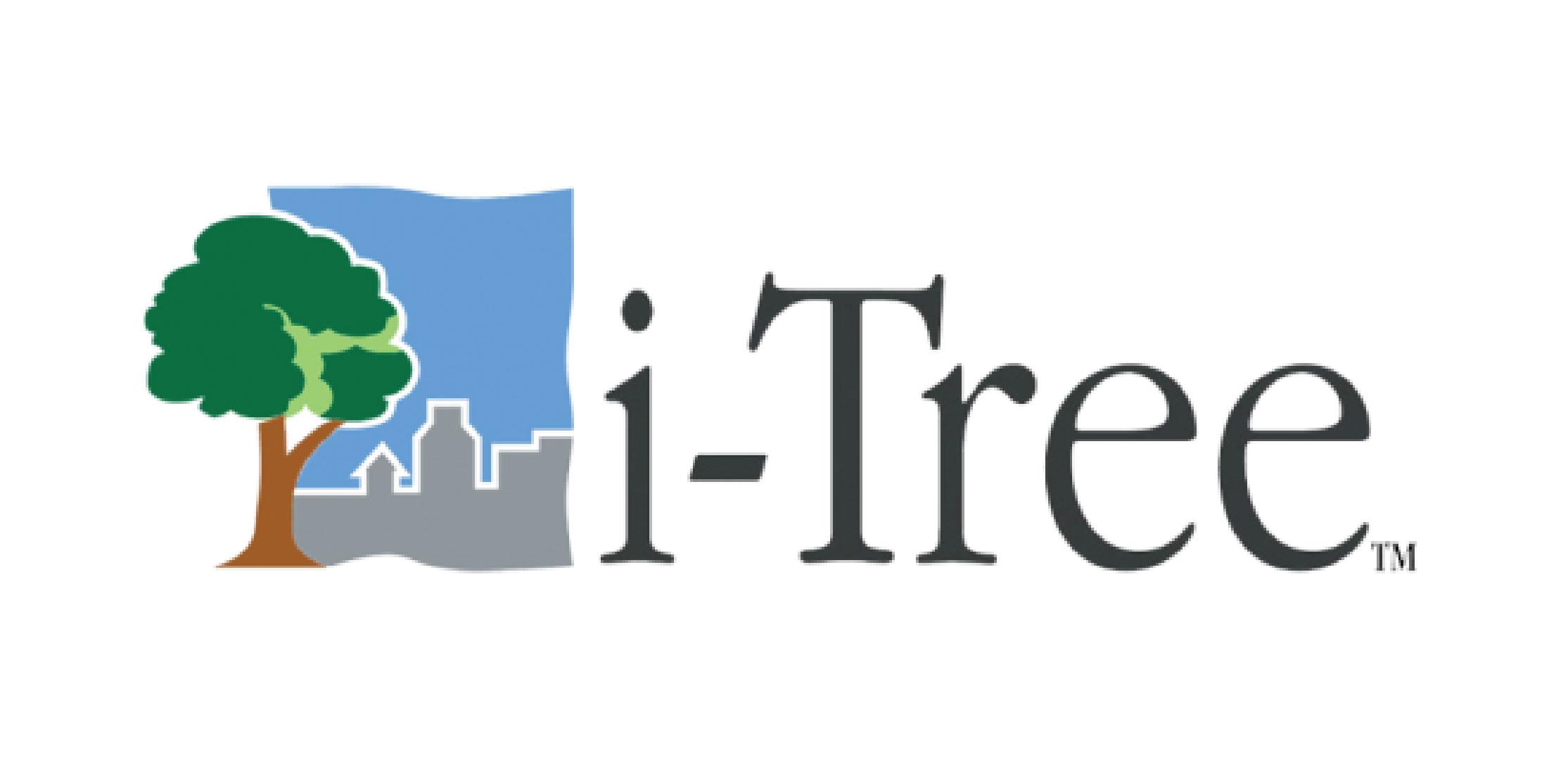Becas Prácticas profesionales remuneradas en I-Tree con Fundación Novia Salcedo